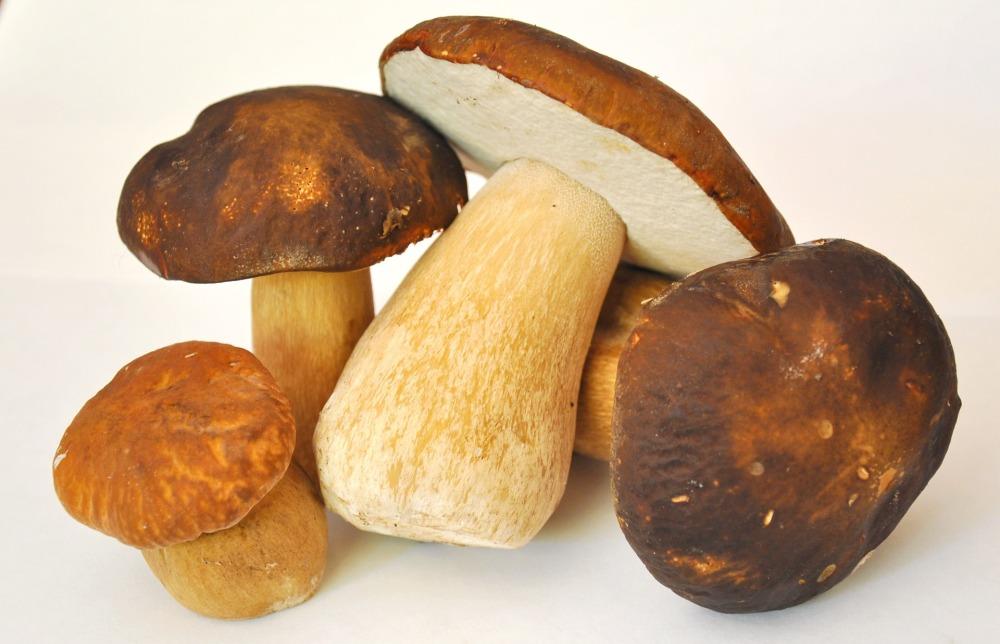 mushroom-913499_1920
